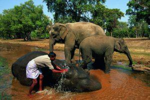 Национальный парк Panna в Индии фото 2