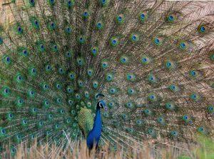 Национальный парк Panna в Индии фото 3