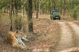 Национальный парк Panna в Индии фото 4