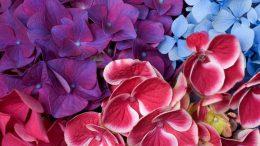 Самые сексуальные растения мира. фото 2